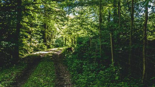Themes: Shamrock woodland path